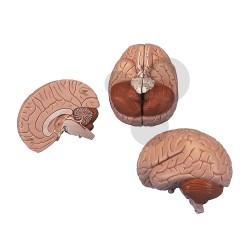 Mozek, model rozložitelný na 2 části