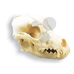 Lebka psa, přírodní odlitek