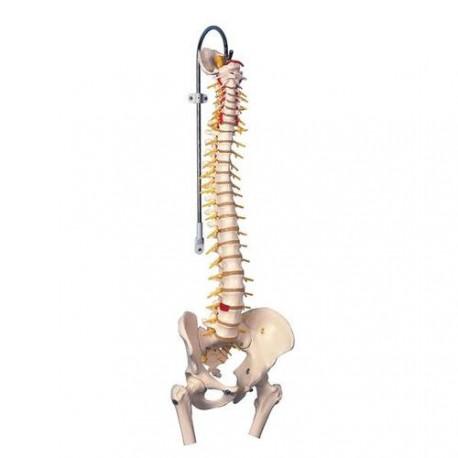Model páteře s pánví, femury, míchou a mozkovým kmenem Nikyta