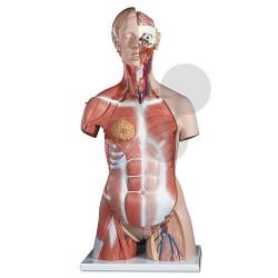 Lidský trup, 31 částí - vysoce kvalitní provedení