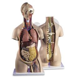 Lidský trup, 18 částí - vysoce kvalitní provedení