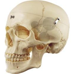 Umělohmotná lidská lebka, SOMSO